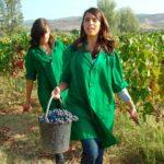 Técnico de Viticultura e Enologia