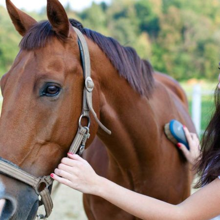 Tratador/a Desbastador/a de Equinos